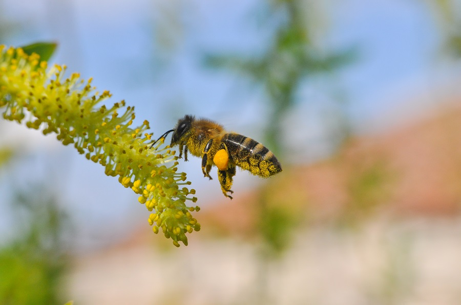 Call the professionals for bee removal los angeles los angeles homes sometimes need bee removal solutioingenieria Gallery