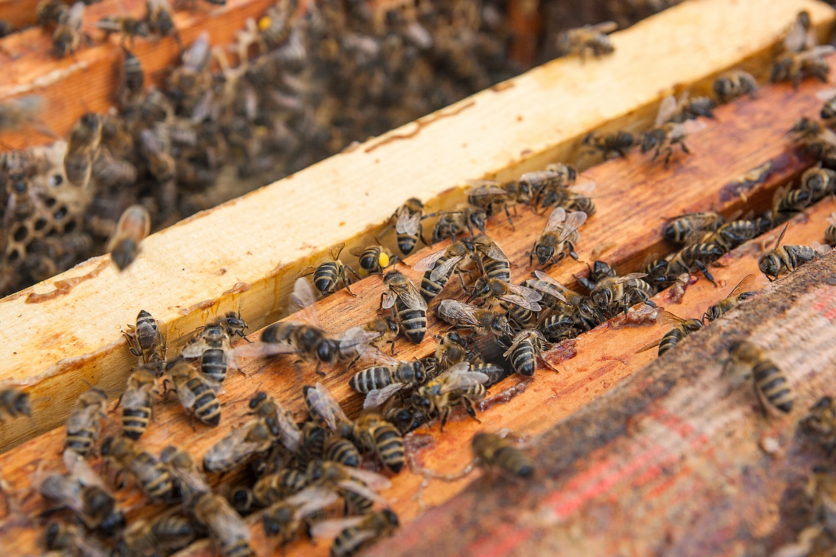 Los-Angeles-Sometimes-Needs-Bee-Removal