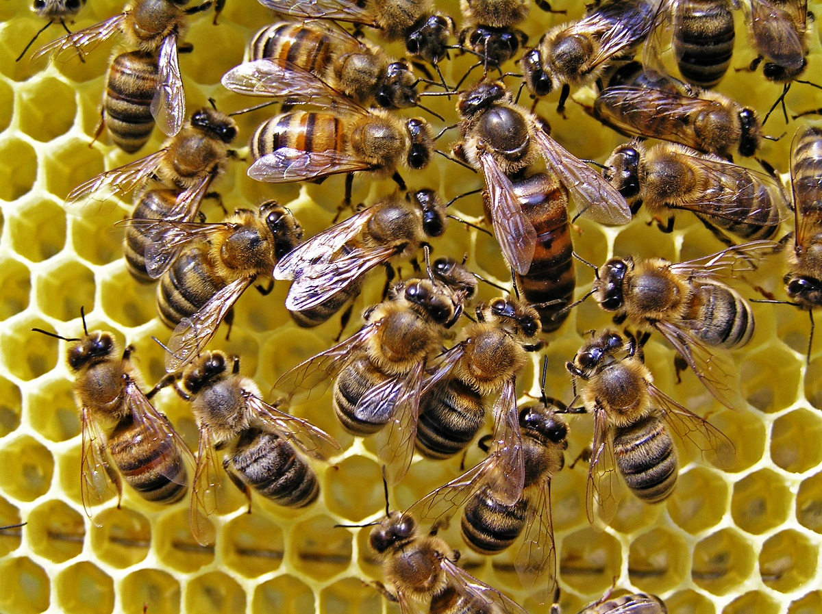 Los-Angeles-Must-Look-Into-Bee-Removal-Services