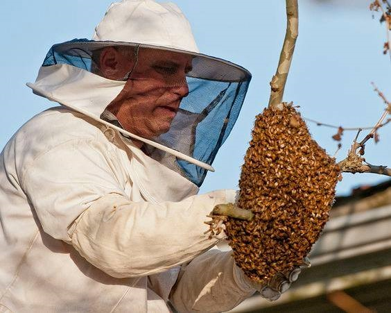 Bee-Removal-Is-Sometimes-Needed-In-The-Los-Angeles-Area