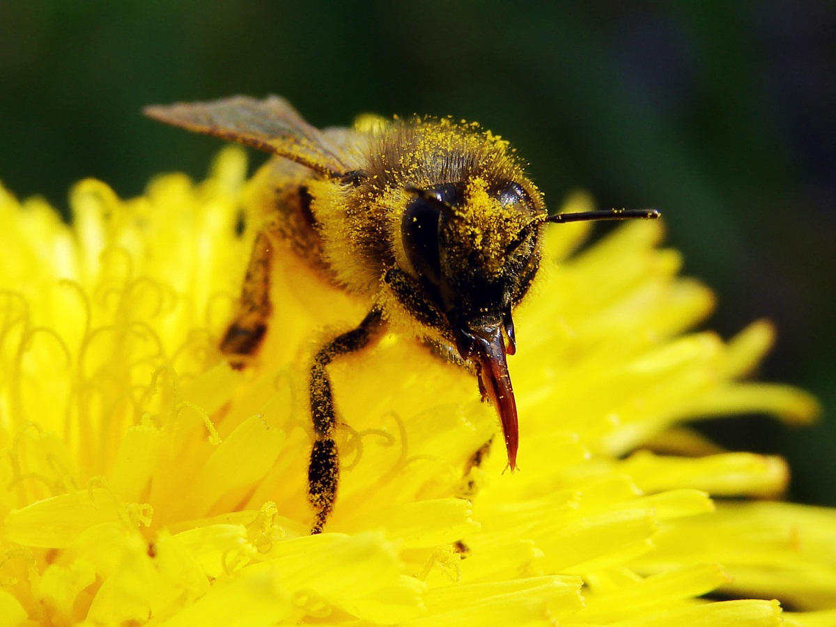 Los-Angeles-Residents-Must-Sometimes-See-About-Bee-Removal