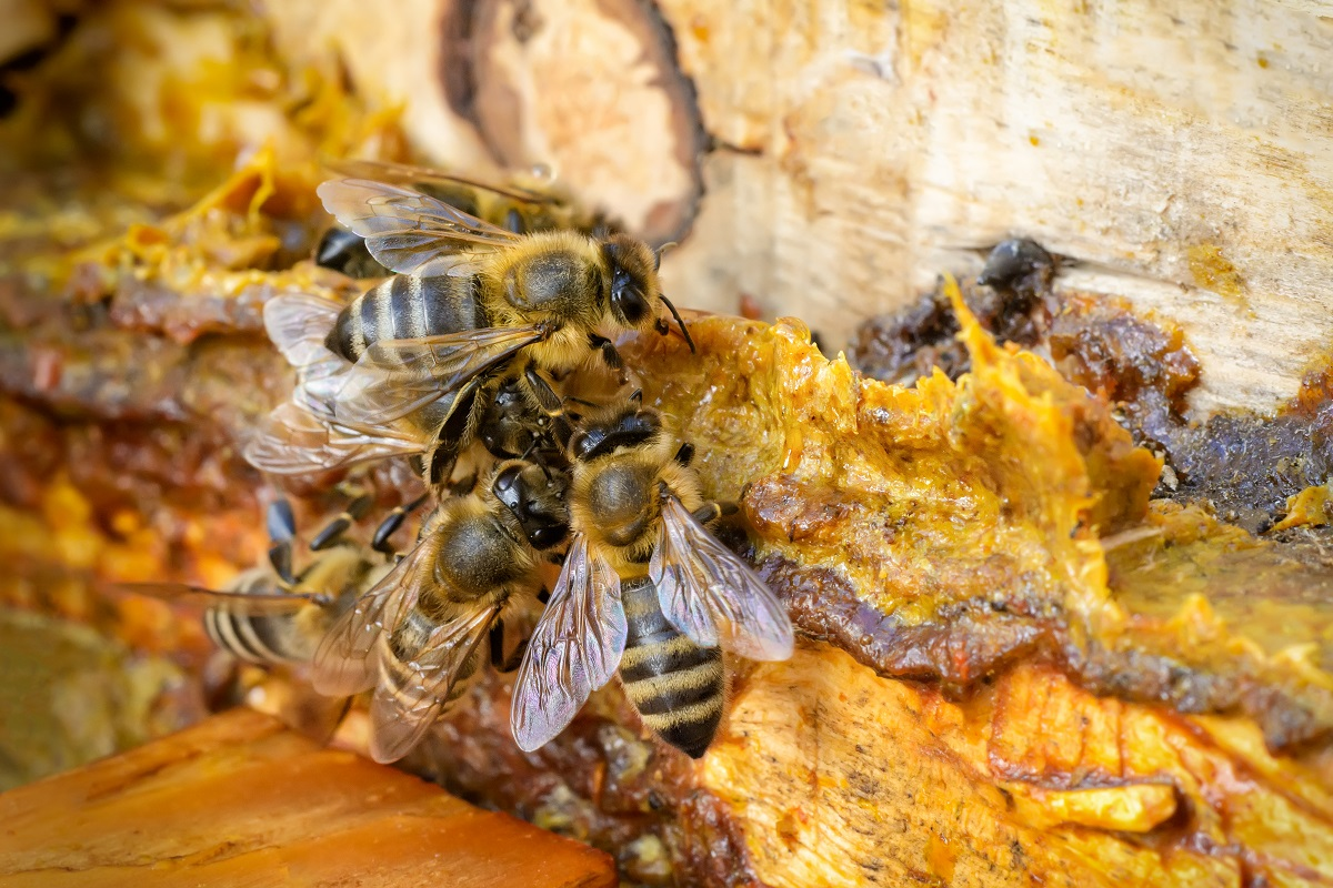 Bee-Removal-In-Los-Angeles-Can-Be-Challenging